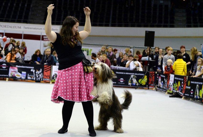 Qué perros pueden practicar dogdancing