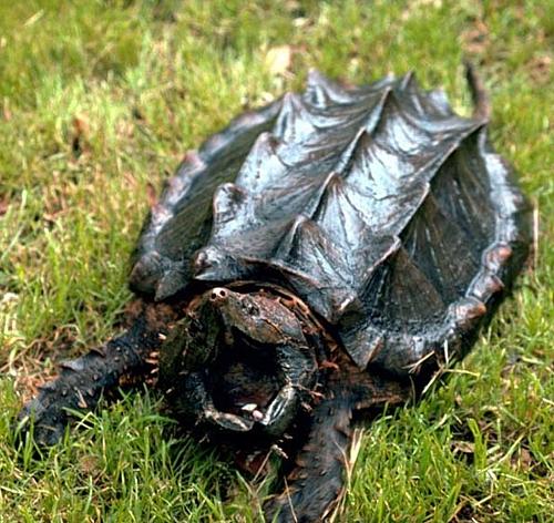 Qué tipos de tortugas hay