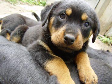 Receta casera de leche para cachorros