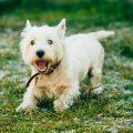 Recetas de comida casera para perros con insuficiencia renal