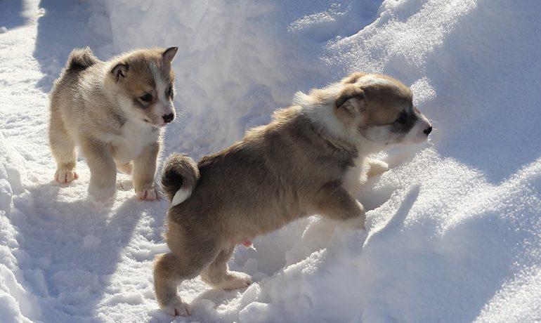 Resfriado en los perros