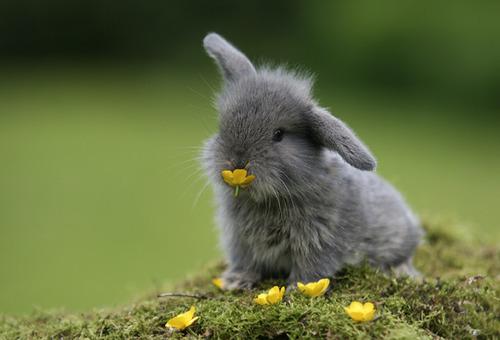 Síntomas de la dermatitis en conejos