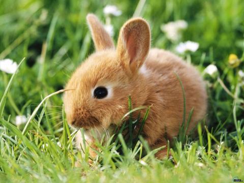 Síntomas de los hongos en conejos