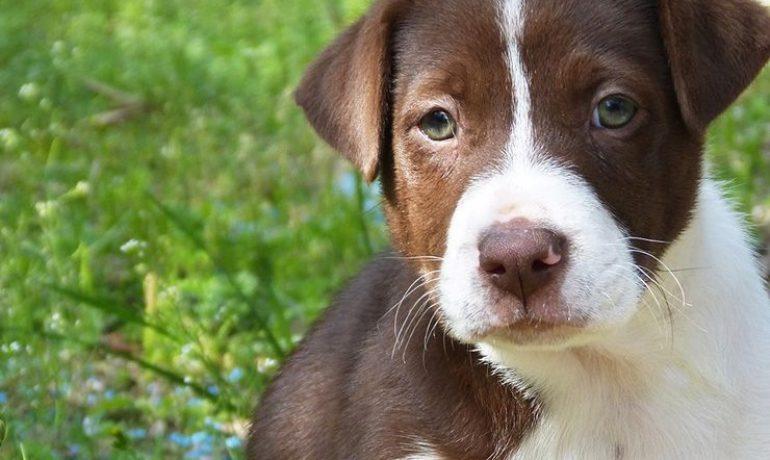 Síntomas y tratamiento de la dermatitis canina