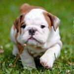 Te contamos cómo enseñar a un cachorro a dar la pata