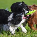 Te lo contamos todo sobre socializar a un perro