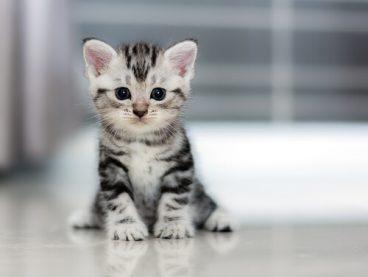 Tipos de diarrea en gatos y su tratamiento