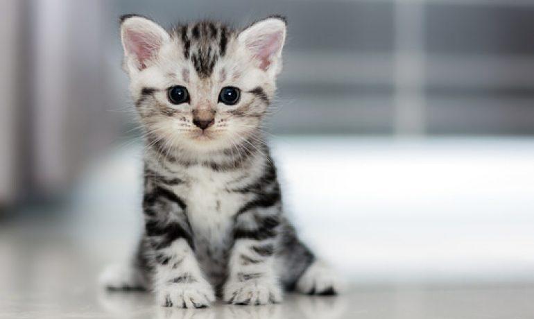 Resultado de imagen para gato