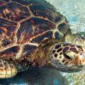 Todo lo que aún no sabes sobre las tortugas Testudines