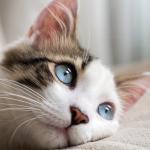 Todo sobre el parásito de la giardia en gatos