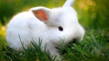 Todo sobre la dermatofitosis en conejos