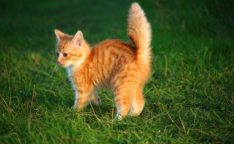 Todos los alimentos peligrosos para gatos