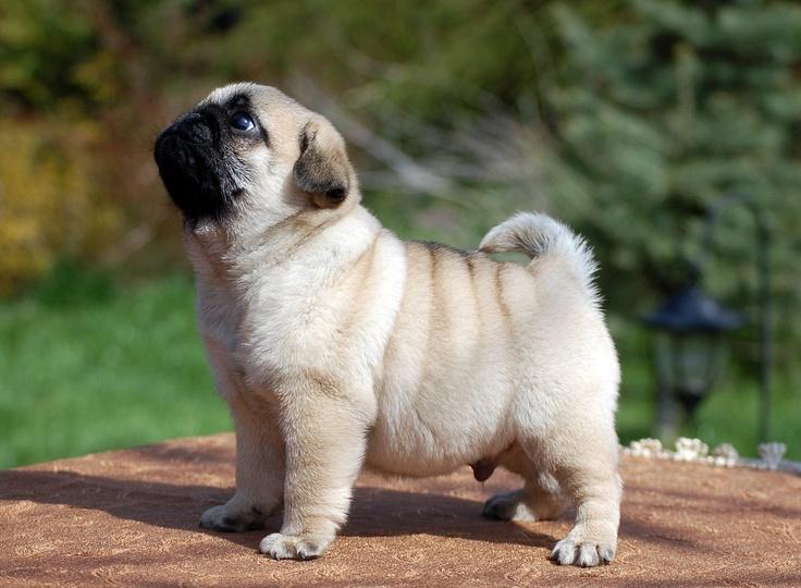 Tratamiento de la dermatitis canina