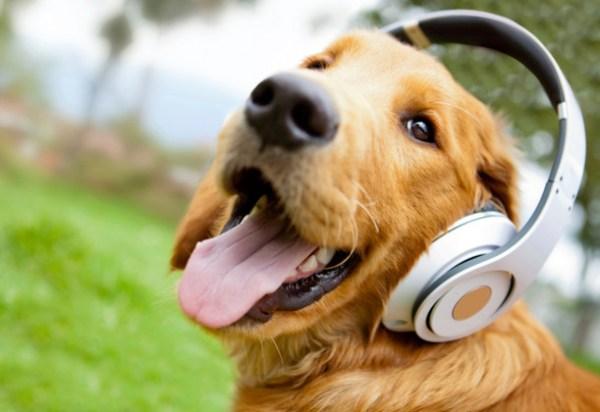 Tratamiento de la dermatitis seborreica en perros