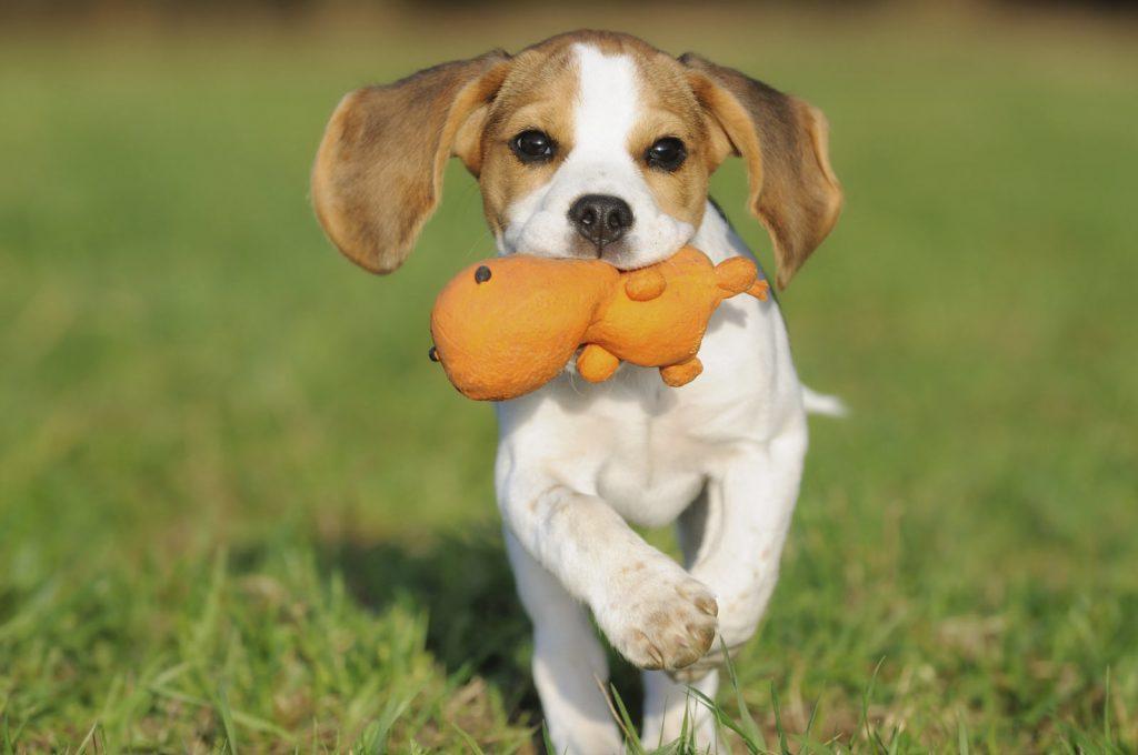 Tratamiento de las convulsiones en perros