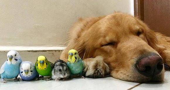 Tratamiento para las pulgas en perros