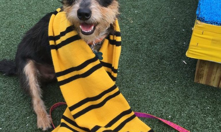 Un refugio busca tu perro ideal según tu casa de Hogwarts