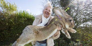 conejo gigante alemán