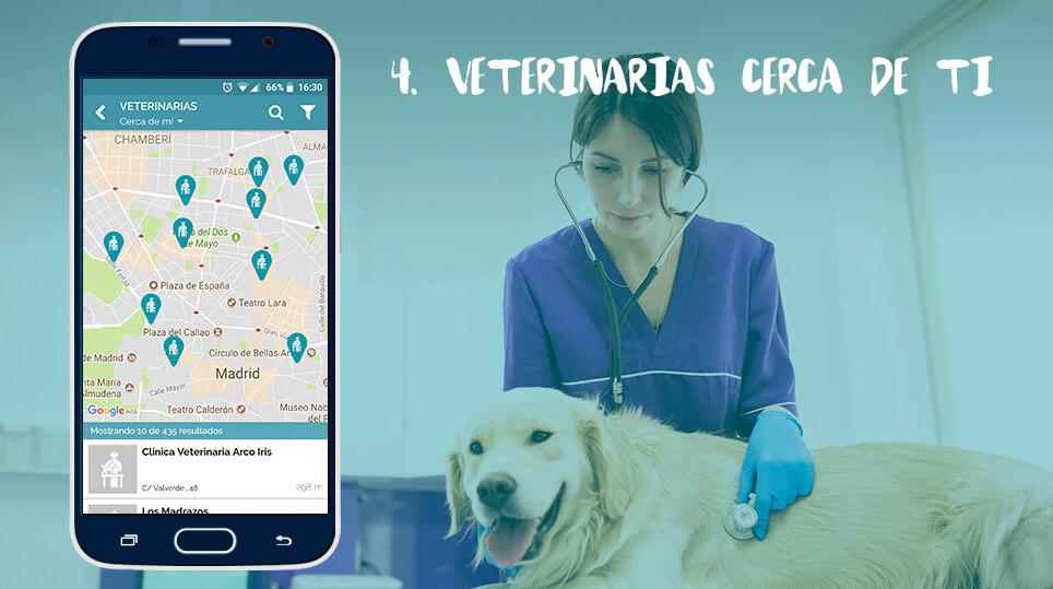 veterinarias wakyma