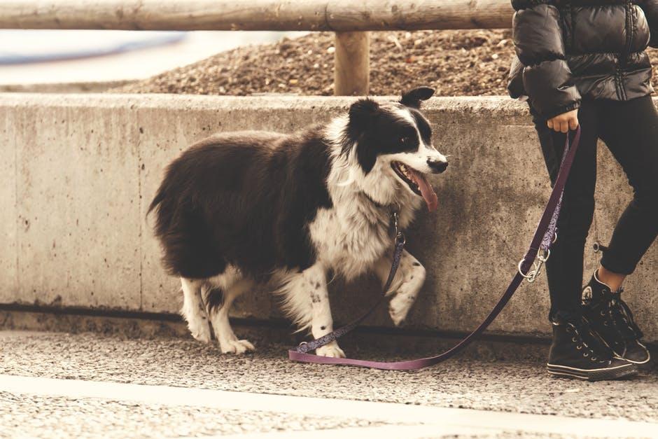 Lleva a tu perro siempre con correa