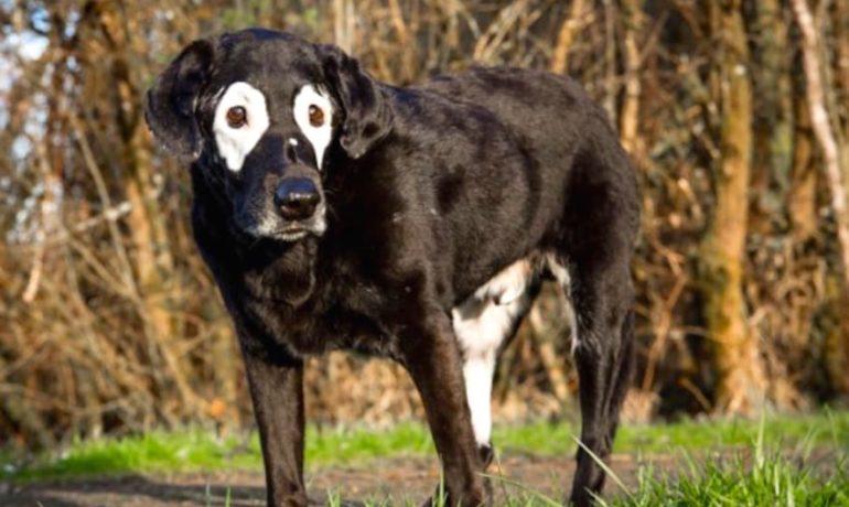 20 fotos de animales con vitiligo que los hace ser únicos en su especie