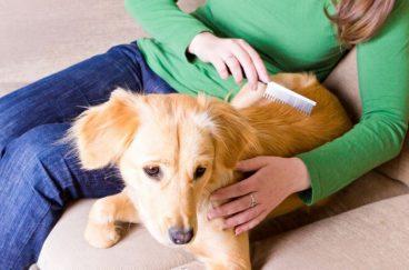 Cómo cepillar a un perro. Aprende a peinarlo paso a paso.