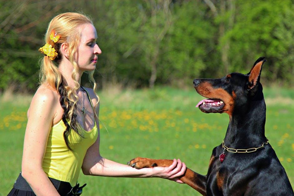 Cómo cuidar de un perro sordo