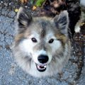Cómo cuidar de un perro sordo. Te damos las claves
