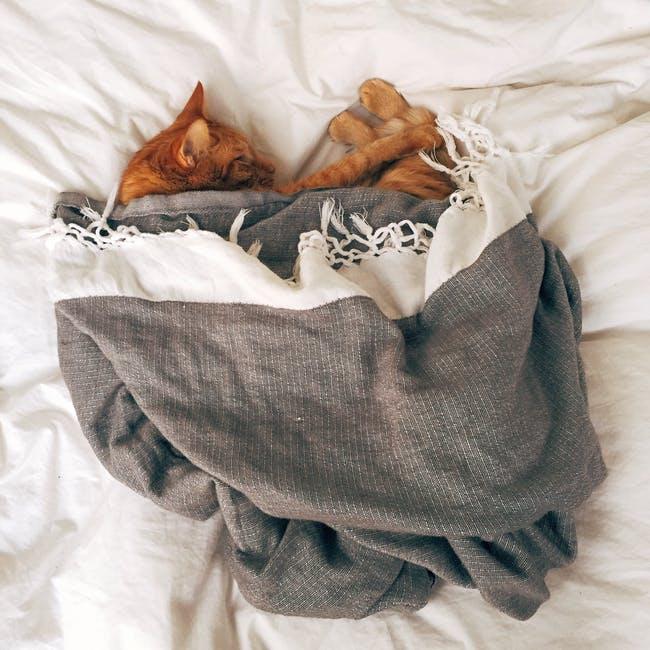 Cómo curar la diarrea de un gato