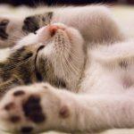 Cómo curar la diarrea de un gato. Tratamiento y remedios caseros