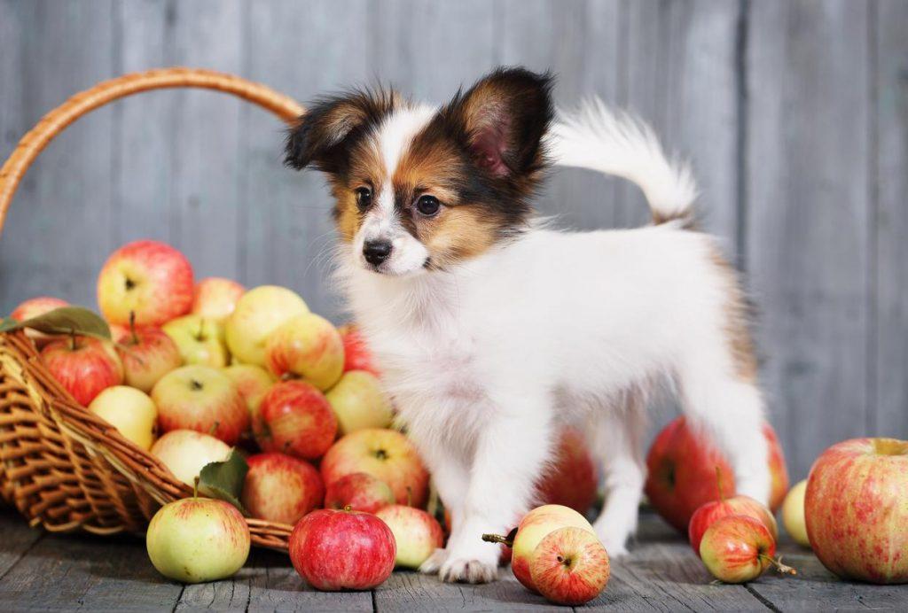 Cómo darle fruta a mi perro
