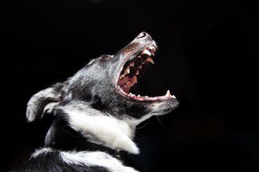 Cómo evitar que un perro muerda. Sigue estos consejos