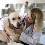 Enfermedades que transmiten las pulgas a nuestros perros