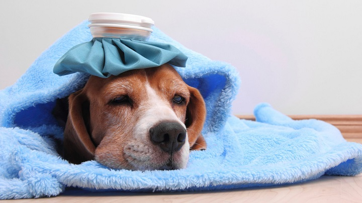 Enfermedades respiratorias en perros