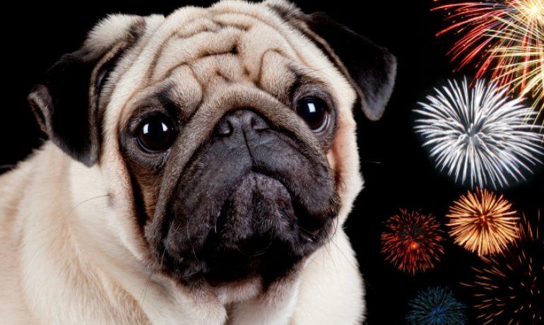 Medicamento efectivo para los perros con miedo a los fuegos artificiales