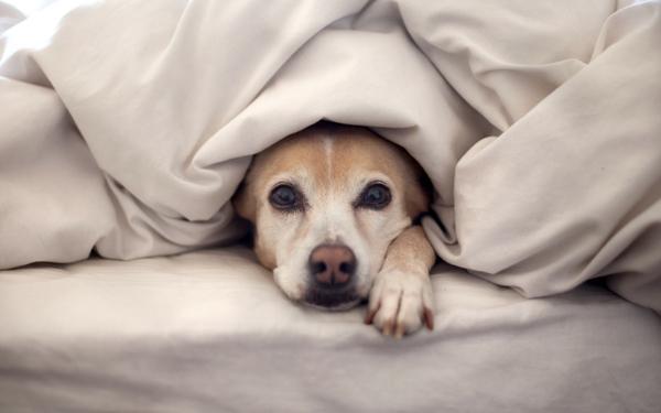 Medicamento para los perros con miedo a los fuegos artificiales