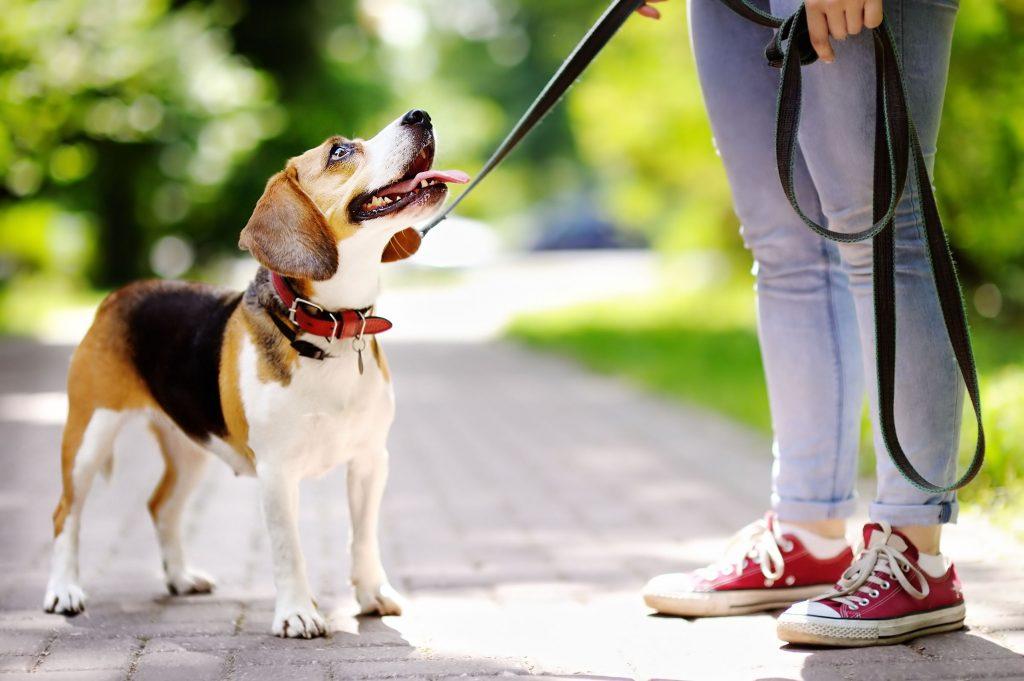 Qué tener en cuenta al elegir una correa para perros
