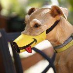 Tipos de bozales para perros, cuántos hay