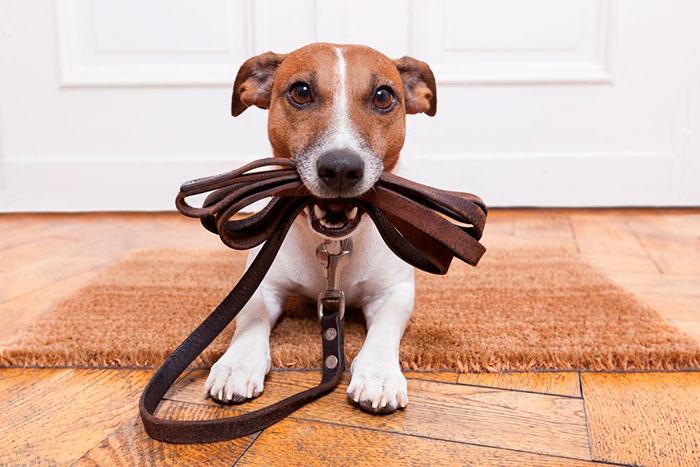 Tipos de correas para perro