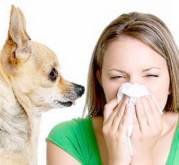 Alergia a los perros y gatos: Las mascotas hipoalergénicas son un mito