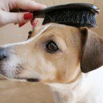 cómo cuidar el pelo de un perro