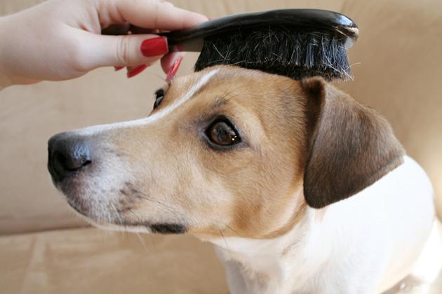 Te contamos todo sobre como cuidar el pelo de un perro wakyma - Como banar a un perro ...