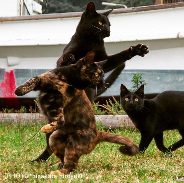 De pelea ninja con mis mejores amigos
