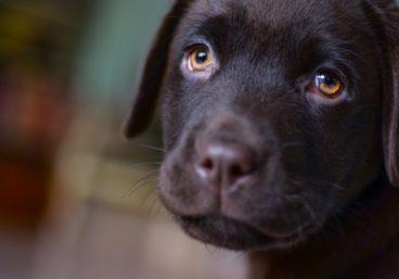 Donde puedo adoptar un perro en Valencia