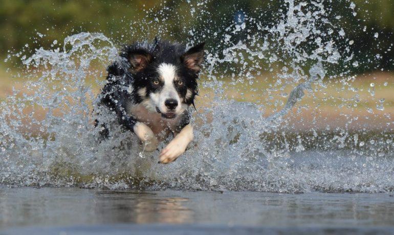 Cómo eliminar el olor de perro cuando está mojado