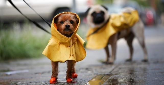 eliminar olor de perro abrigo