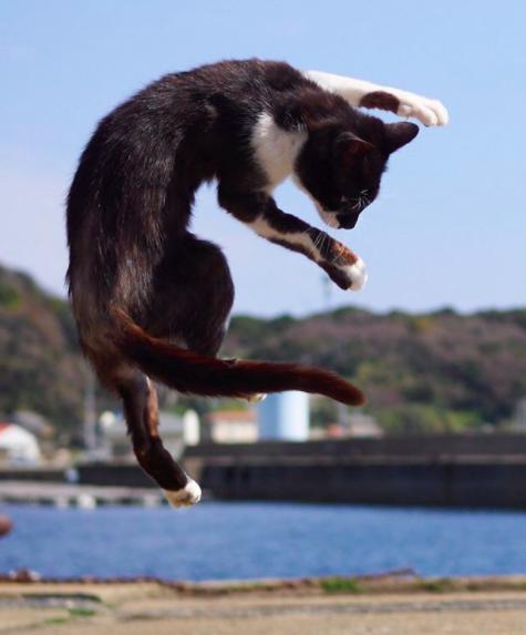 Gato Kung Fu