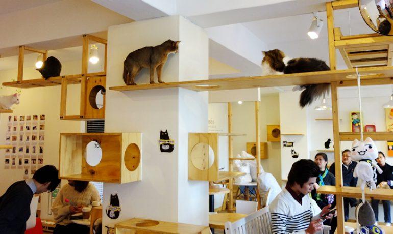 Cafeterías con gatos, una nueva moda en auge