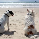 gijon-la-ciudad-mas-dogfriendly-de-espana