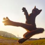 Los gatos son Ninjas, y este fotógrafo japonés lo prueba